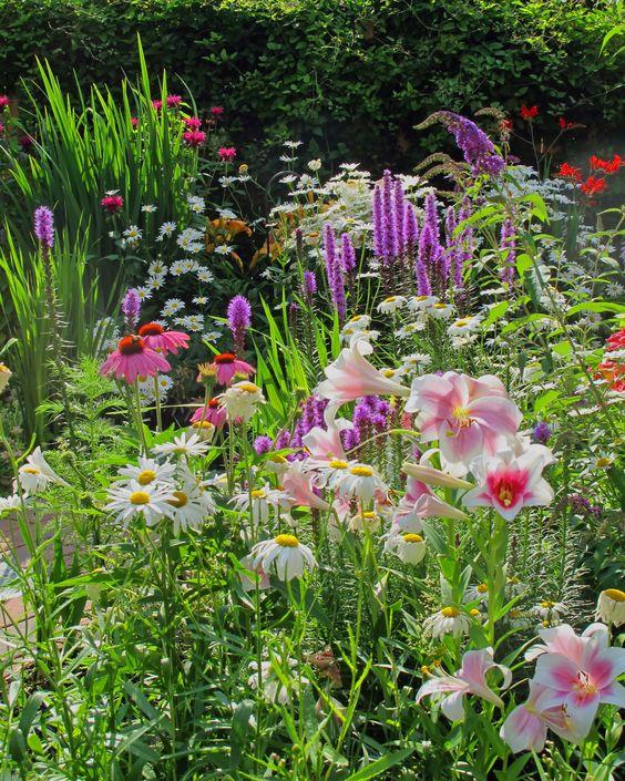 wilde bloemen tuin