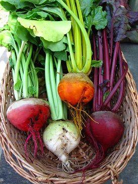 moestuin groente