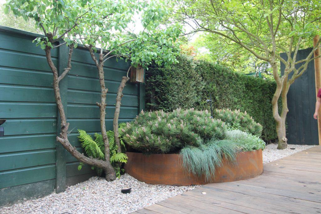 siergrassen moderne tuin